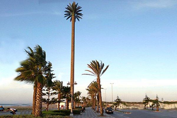 Pylône Palmier 20m – Marrocos